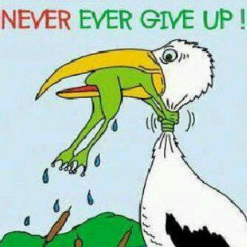 Never ever give up  ~  #poster #quote #taolife